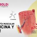La ciencia de la Leucina en la vía mTOR para la hipertrofia muscular